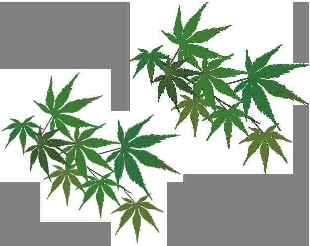 Left Leaf Logo Background